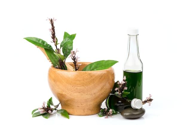 Цветы justicia gendarussa, зеленые листья и масло, изолированные на белом фоне.