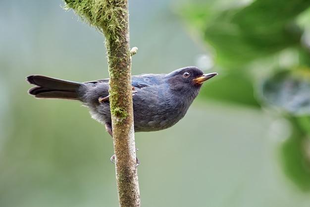 垂直方向の枝に腰掛け幼い鳥