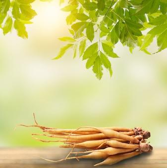 녹색 자연 배경에서 건강을 위한 태국 음식과 허브를 위한 캠퍼 성분