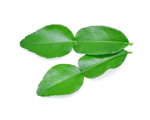 白い背景で隔離のカフィアライムの葉