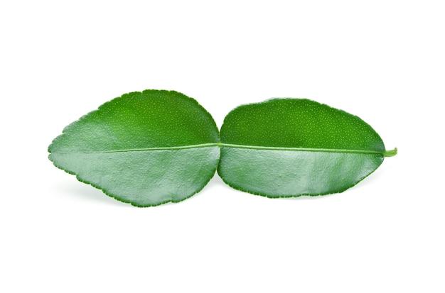 Kaffir lime leaf isolated on white