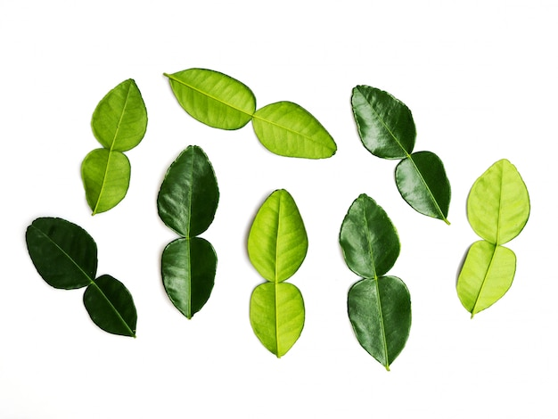 Kaffir lime leaves fresh bergamot leaf isolated on white.