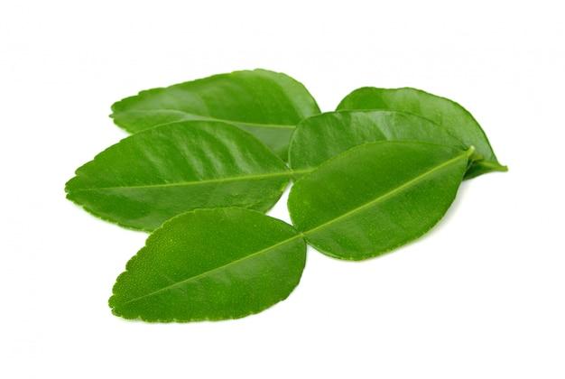 Листья каффир лайма изолированные