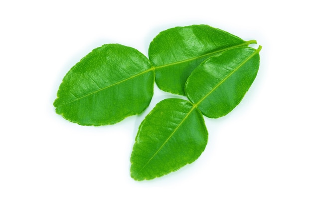 白い背景にカフィアライムの葉。緑色の葉。