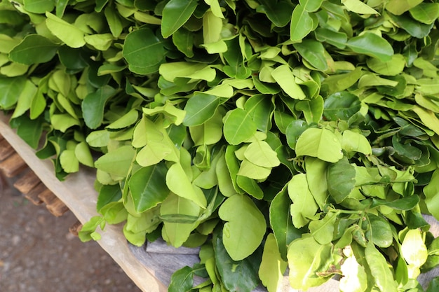 Kaffir lime leaves sell at market
