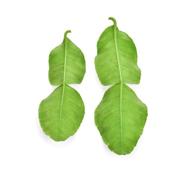 カフィアライムの葉