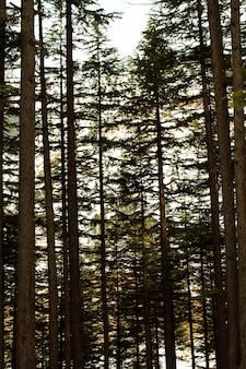 Kalam swatの風景風景の中のushoの森の木