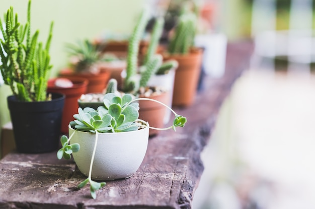 Kalanchoe plants on wooden table