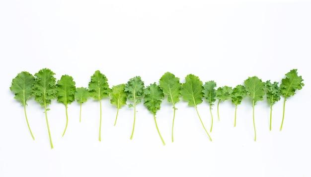 Листья капусты. вид сверху