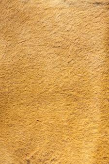 Kangaroo fur closeup background.