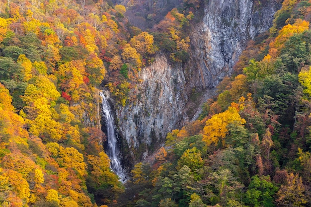 Kanman fall in autumn on mt.shigakogen, nagano, japan.