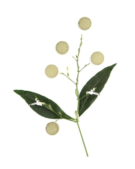 Kariyat or andrographis paniculata, branch green leaves and tablet isolated on white.top view,flat lay.