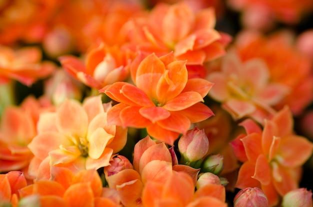 燃えるkatyの花
