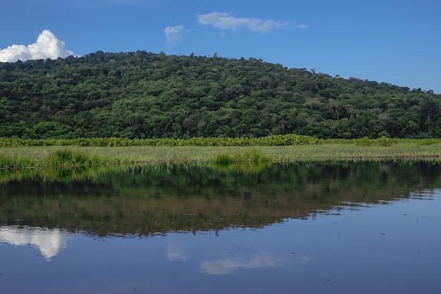 Kaw marsh、marais de kaw、フランス領ギアナ、フランス