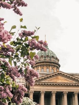 Казанский собор под веткой сиреневых цветов в санкт-петербурге
