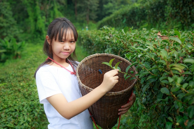 農園に茶葉を残す