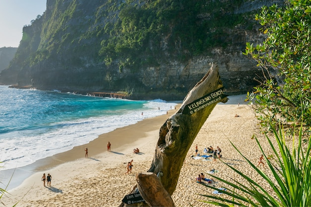 Kelingking beach in nusa penida island, bali in indonesia.