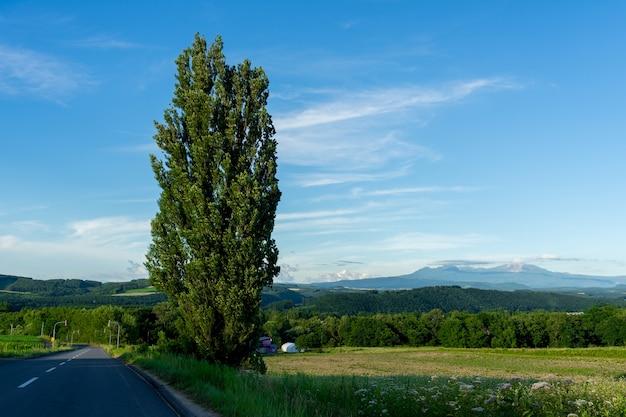 北海道の山と青空を背景にしたケンとメアリーの木