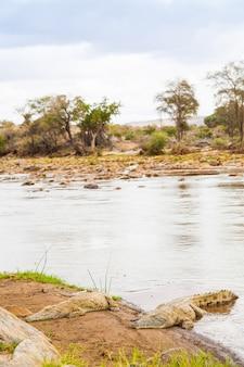 ケニア、ツァボイースト国立公園。日没前の最後の太陽に加わるワニ