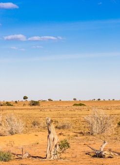 ケニア、ツァボイースト国立公園。サバンナの真ん中で、素晴らしい青い空と
