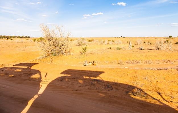 ケニア、ツァボイースト国立公園。オレンジとブルーのパノラマのサファリ車のシルエット Premium写真