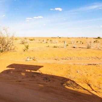 ケニア、ツァボイースト国立公園。オレンジとブルーのパノラマのサファリ車のシルエット