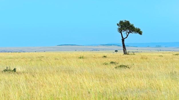 여름에 케냐 마사이 마라 사바나 풍경입니다. 아프리카