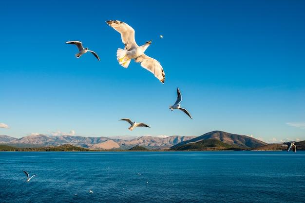 이오니아 해의 코르푸 섬에있는 케르 키라 코르푸 마을과 푸른 물 위를 날고있는 갈매기