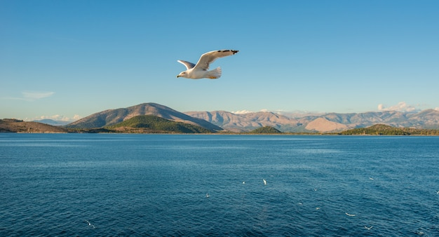 イオニア海のコルフ島にあるケルキラコルフの町。ギリシャ。青い水の上を飛んでいるカモメ、背景の岩。美しい風景。
