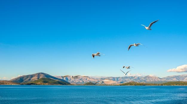 이오니아 해의 코르푸 섬에있는 케르 키라 코르푸 마을. 그리스. 푸른 물 위에 비행하는 갈매기. 자연의 아름다운 풍경.