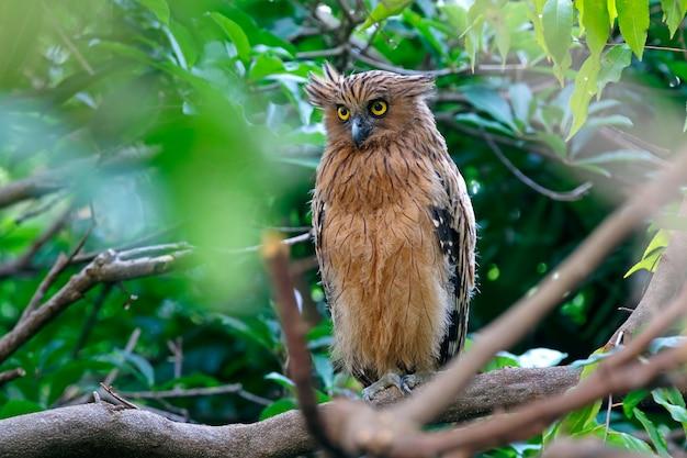 Коллекция красивых совы с большими глазами | Бесплатно векторы