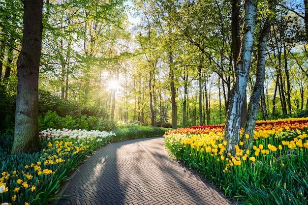 Кёкенхоф цветочный сад. лиссе, нидерланды.