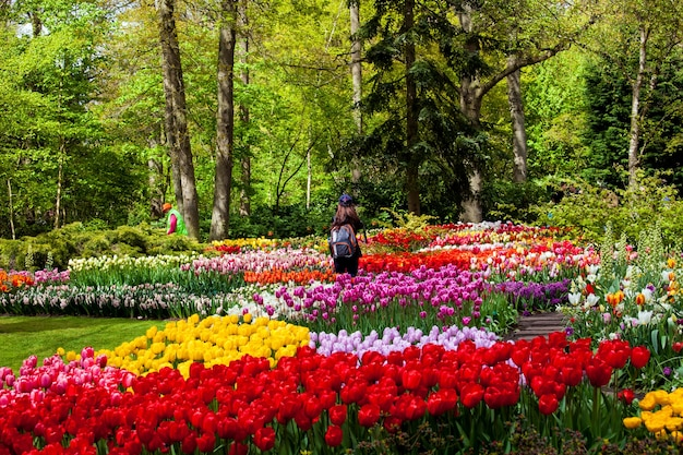 Keukenhof, 네덜란드 -4 월, 2017 : 암스테르담 지역, 네덜란드에서 봄 꽃 keukenhof 공원에서 방문자.