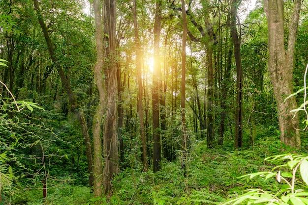 Kew mae panネイチャートレイルジャングルの中を走るトレッキングトレイル