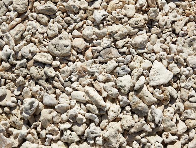 Key west beach shells sand detail in florida
