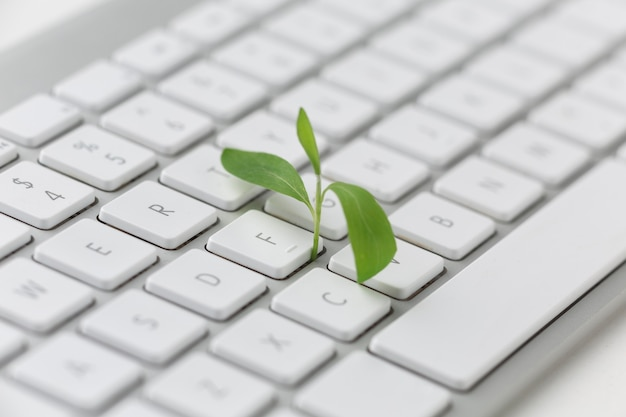 Keyboard with small plant