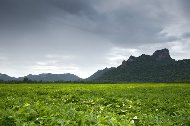 Khao jeen lae in cloudy day, big mountain at thailand