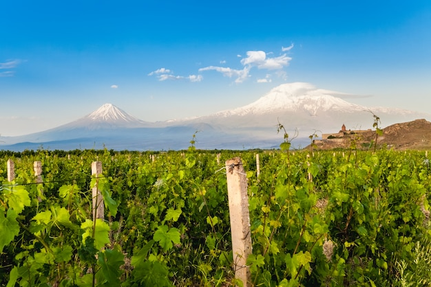 Khor virap and mount ararat