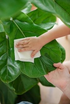 Bambino che pulisce le piante d'appartamento a casa