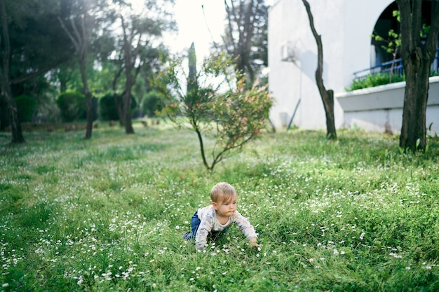 Kid crawls on the lawn among white daisies on the background of the building