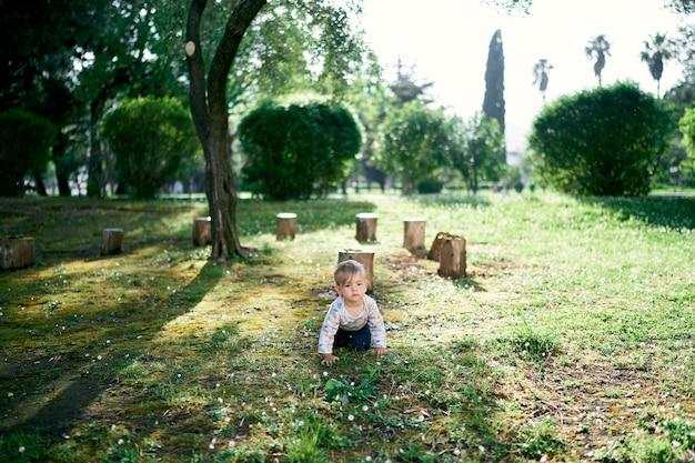아이는 그루터기와 나무의 배경에 대해 공원에서 무릎을 꿇고 기어갑니다.