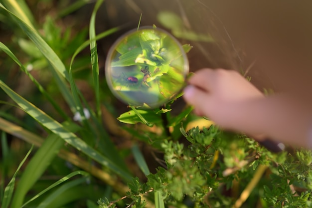 Kid exploring nature with magnifying glass. little boy looking at beetle with magnifier. close up.