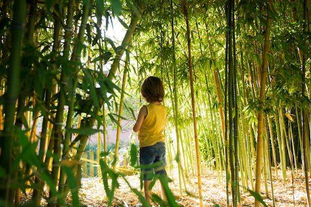 대나무 숲을 걷는 아이