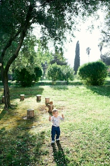 Kid walks through the clearing against the background of stumps and a tree