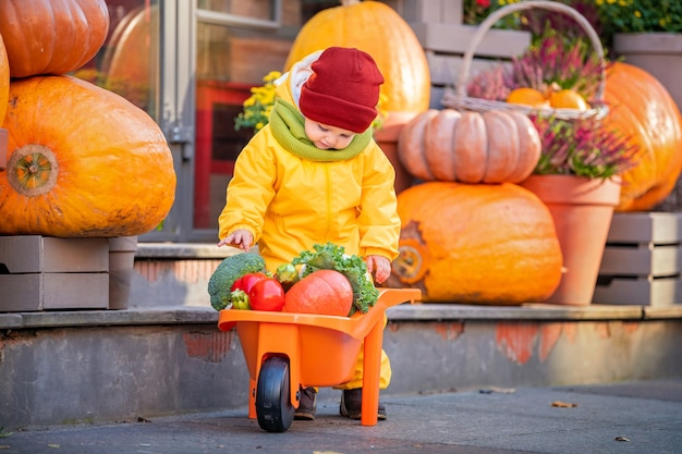 A kid in a yellow overalls drives a toy car filled with vegetables among large pumpkins at the fall fair.