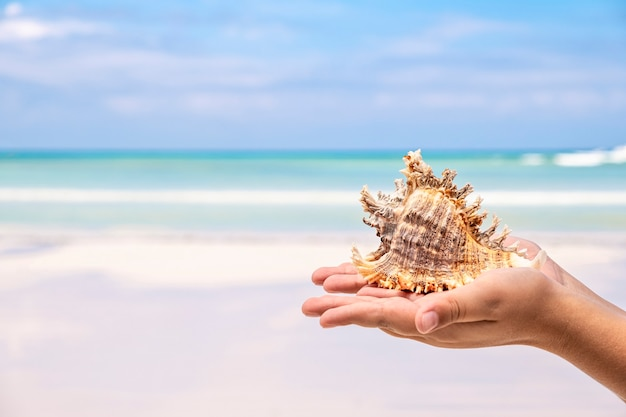 Kids hand holding large sea shell on blue sky and ocean background, tropical summer concept