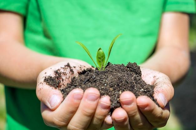 아이들의 손은 식물 묘목으로 흙을 잡고 있습니다. 환경 지구의 날입니다. 행성과 새로운 삶의 개념을 저장합니다. 아이 돌보는 어린 녹색 식물 새싹 잎.