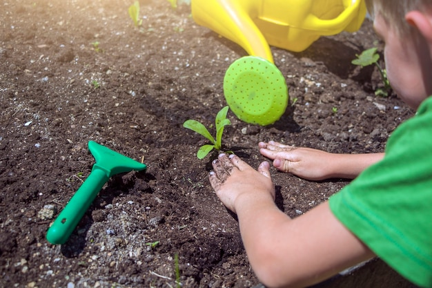 토양에 묘목을 심는 아이 손. 환경 지구의 날. 행성 개념을 저장합니다. 땅에 어린 나무를 돌보는 아이,
