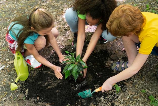 Дети вместе сажают в лесу Premium Фотографии