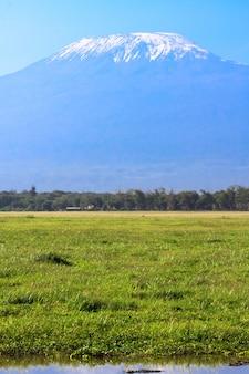 Килиманджаро вид из саванны Premium Фотографии
